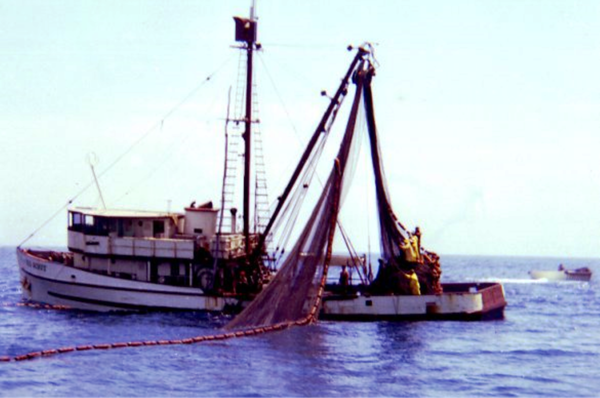 Sea Scout,Built 1945 Terminal Island,Andrew Rafklin Jr,Matt Dragich,Conversion,Pic Taken Early 60's,